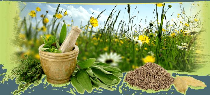 Ekologicze herbaty i zioła